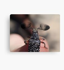Feather-horned Beetle Metal Print