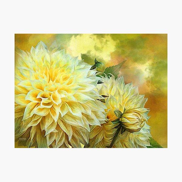Yellow Dahlias Photographic Print