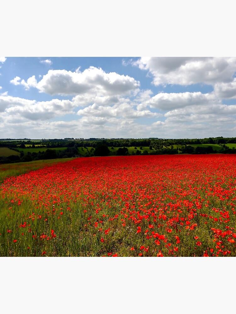 Poppy field landscape by ScenicViewPics