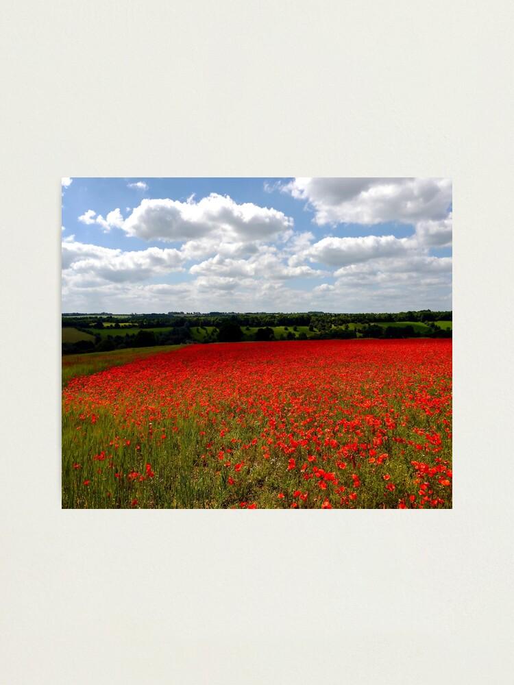 Alternate view of Poppy field landscape Photographic Print