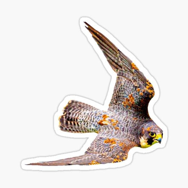 Stooping Falcon Sticker