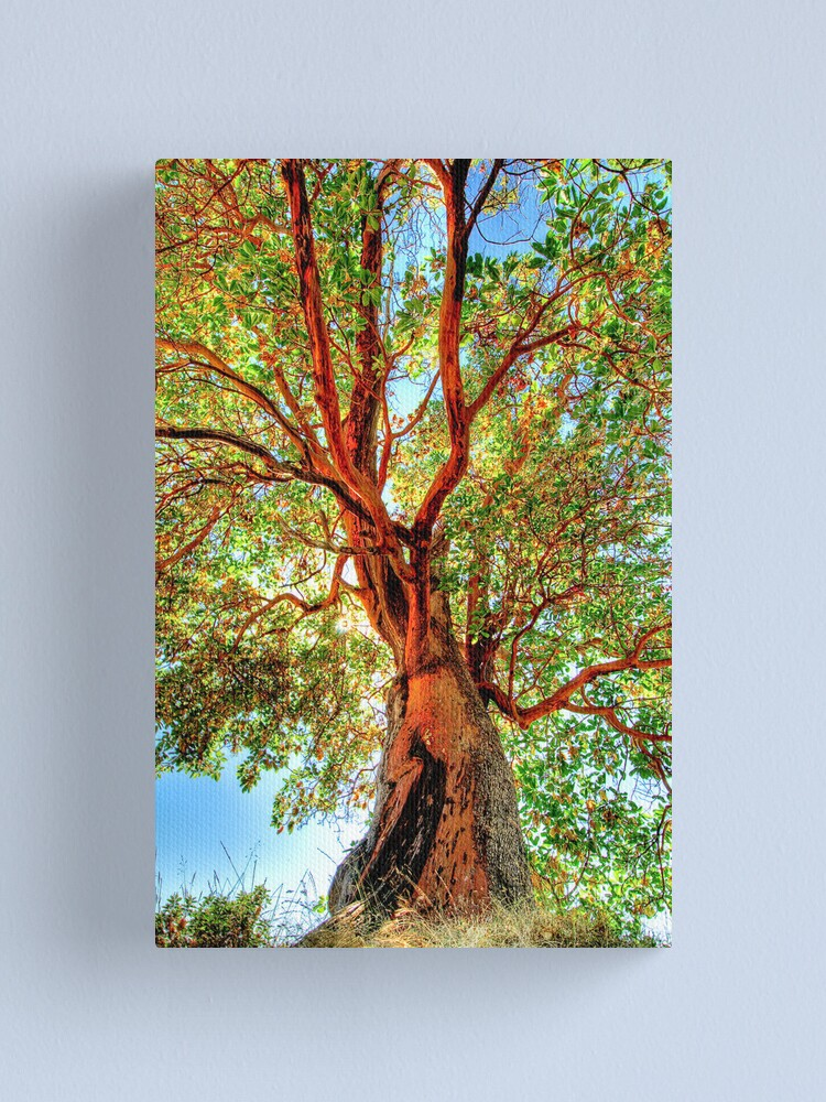 Alternate view of Shimmering Arbutus Canvas Print