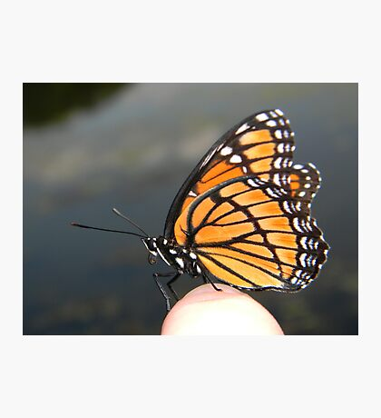 Monarch on my finger! Photographic Print