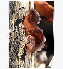 Mushroom Ears Poster