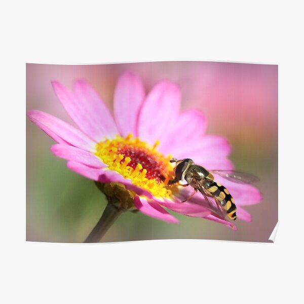 Hoverfly – Sweefvlieg Poster