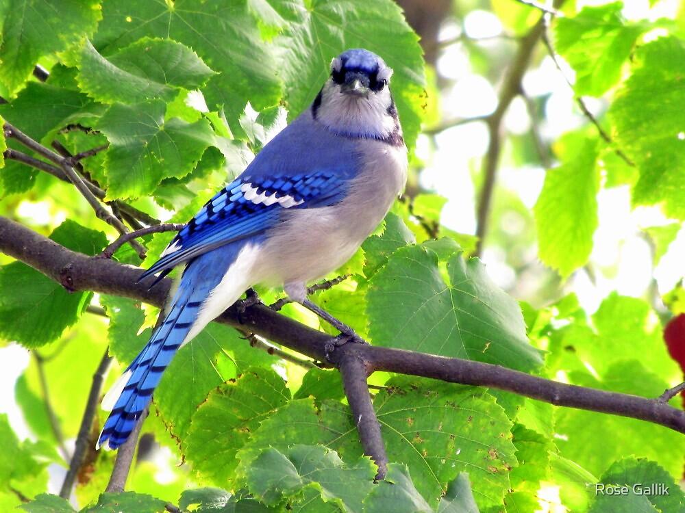 Mr. Blue by Rose Gallik