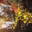 Changing Seasons in the Vines by teresa731