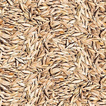 Bio, Triticum boeoticum, Einkorn wheat by ARGO