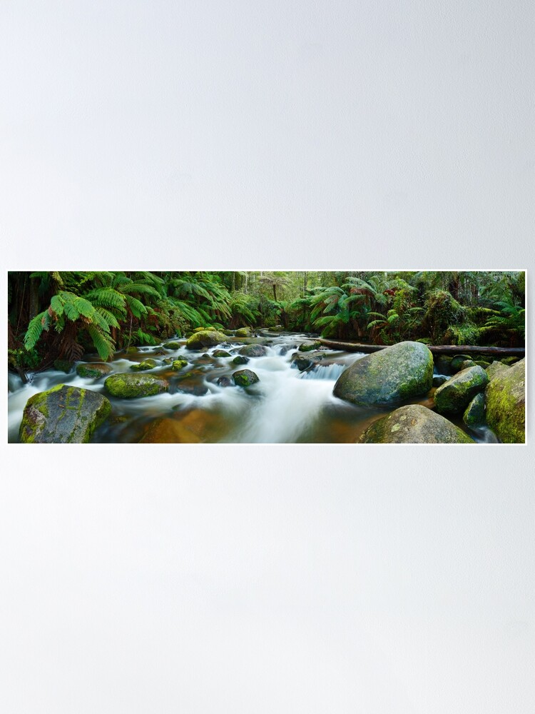 Alternate view of Toorongo River, Gippsland, Victoria, Australia Poster