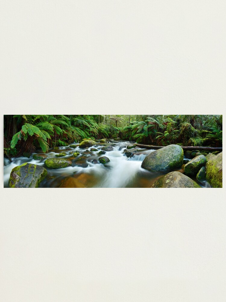 Alternate view of Toorongo River, Gippsland, Victoria, Australia Photographic Print