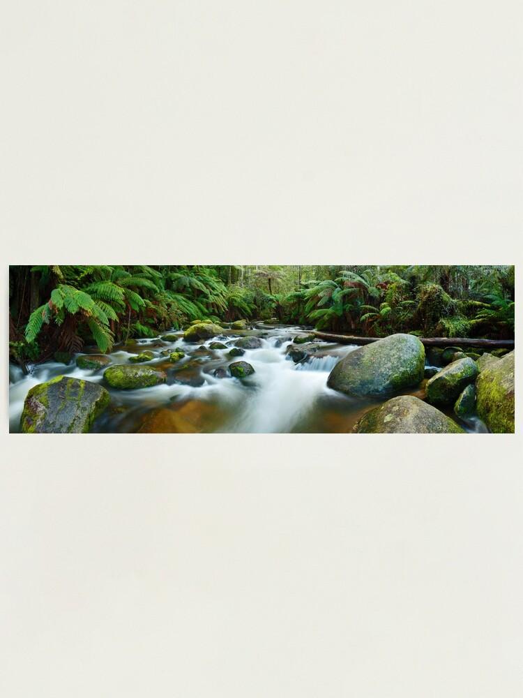 Alternate view of Toorongo River, Gippsland, Victoria, Australia Photographic Print
