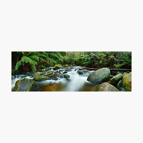 Toorongo River, Gippsland, Victoria, Australia Photographic Print
