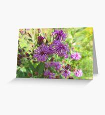 Cornflowers in Bloom Greeting Card