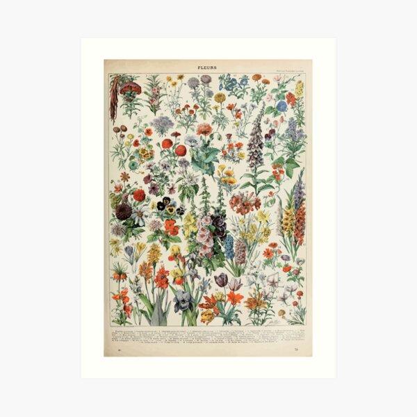 Adolphe Millot fleurs A Art Print