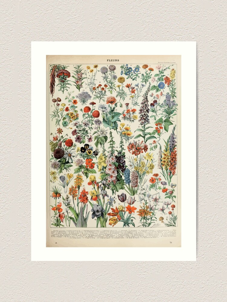 Alternate view of Adolphe Millot fleurs A Art Print