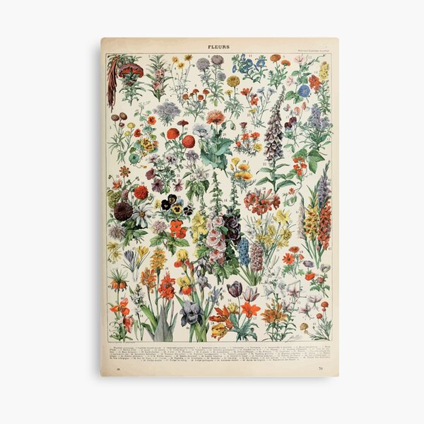Adolphe Millot fleurs A Leinwanddruck