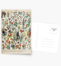 Adolphe Millot fleurs A Postcards