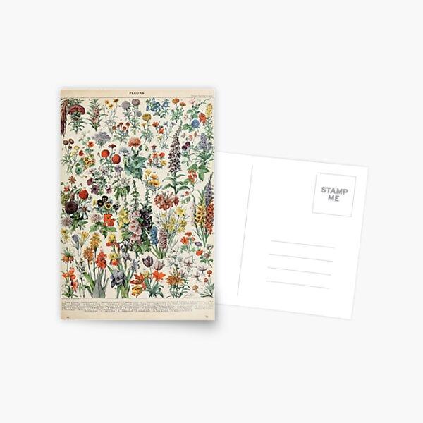 Adolphe Millot fleurs A Carte postale