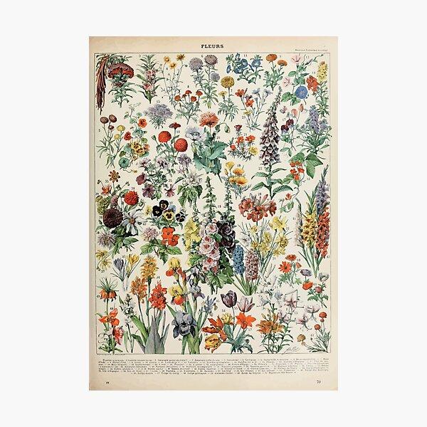 Adolphe Millot fleurs A Photographic Print