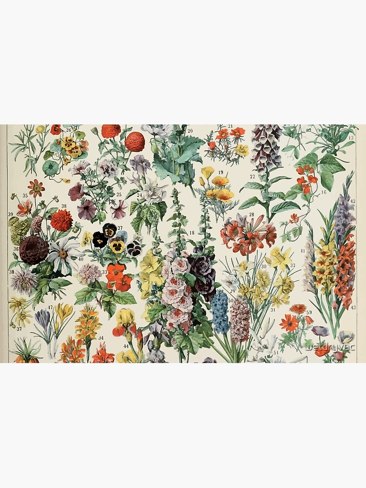 Adolphe Millot fleurs A by wetdryvac