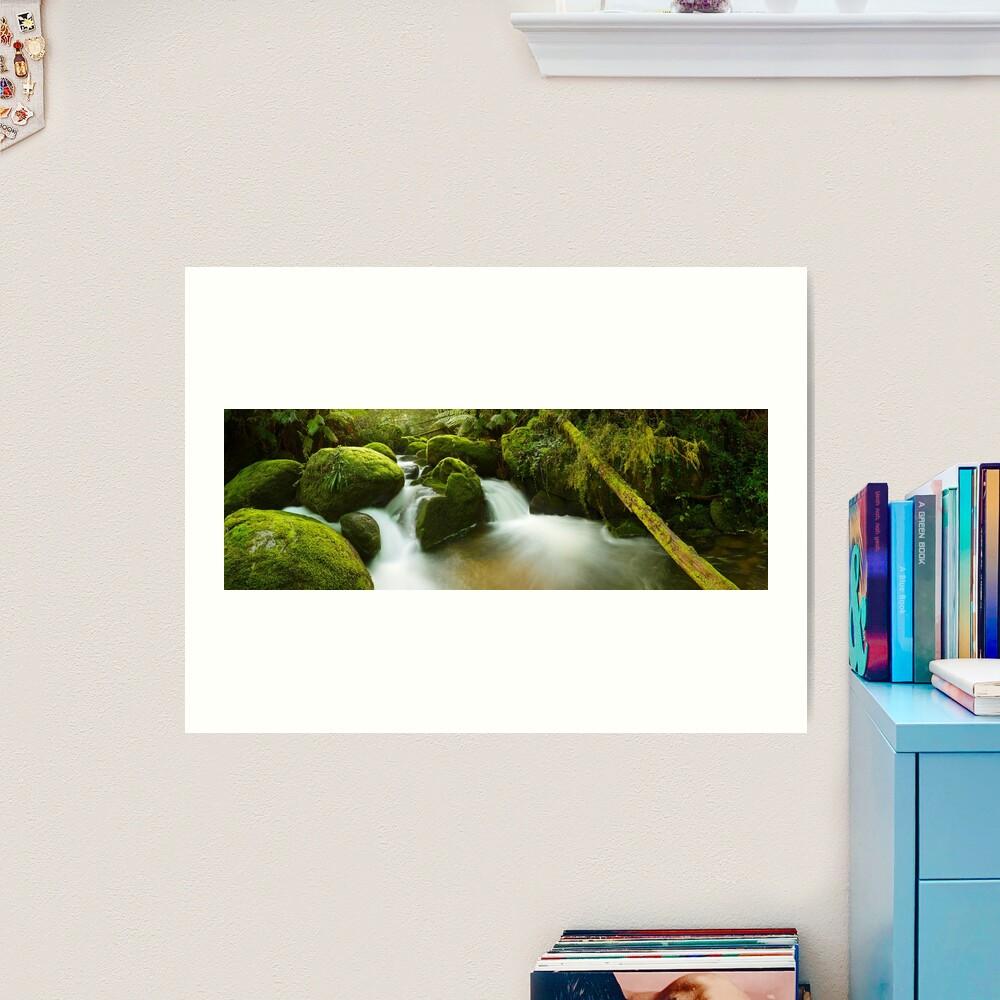 Dawn Moss, Toorongo River, Gippsland, Victoria, Australia Art Print