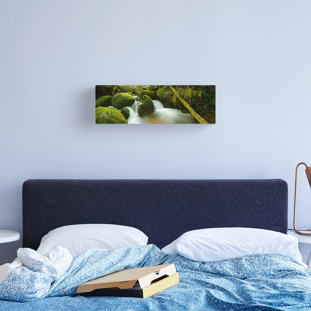 Dawn Moss, Toorongo River, Gippsland, Victoria, Australia Canvas Print