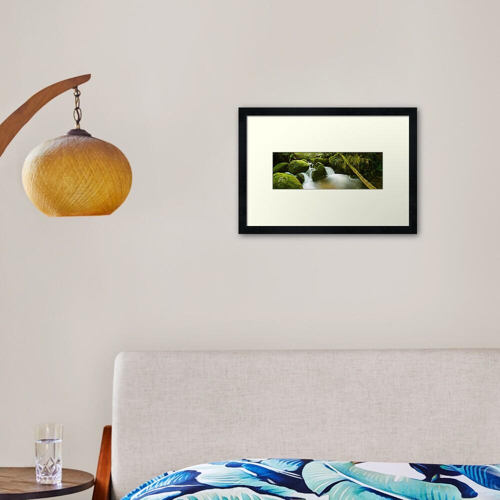 Dawn Moss, Toorongo River, Gippsland, Victoria, Australia Framed Art Print