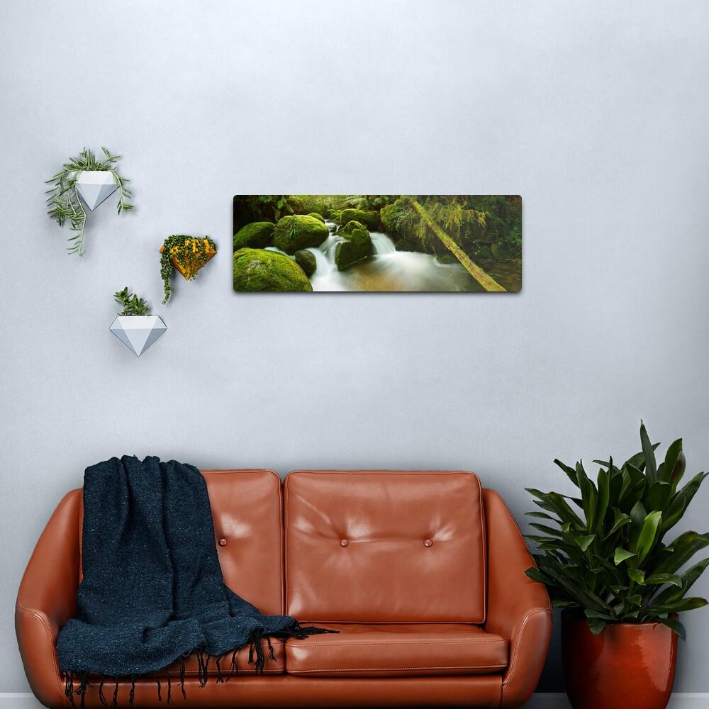 Dawn Moss, Toorongo River, Gippsland, Victoria, Australia Metal Print