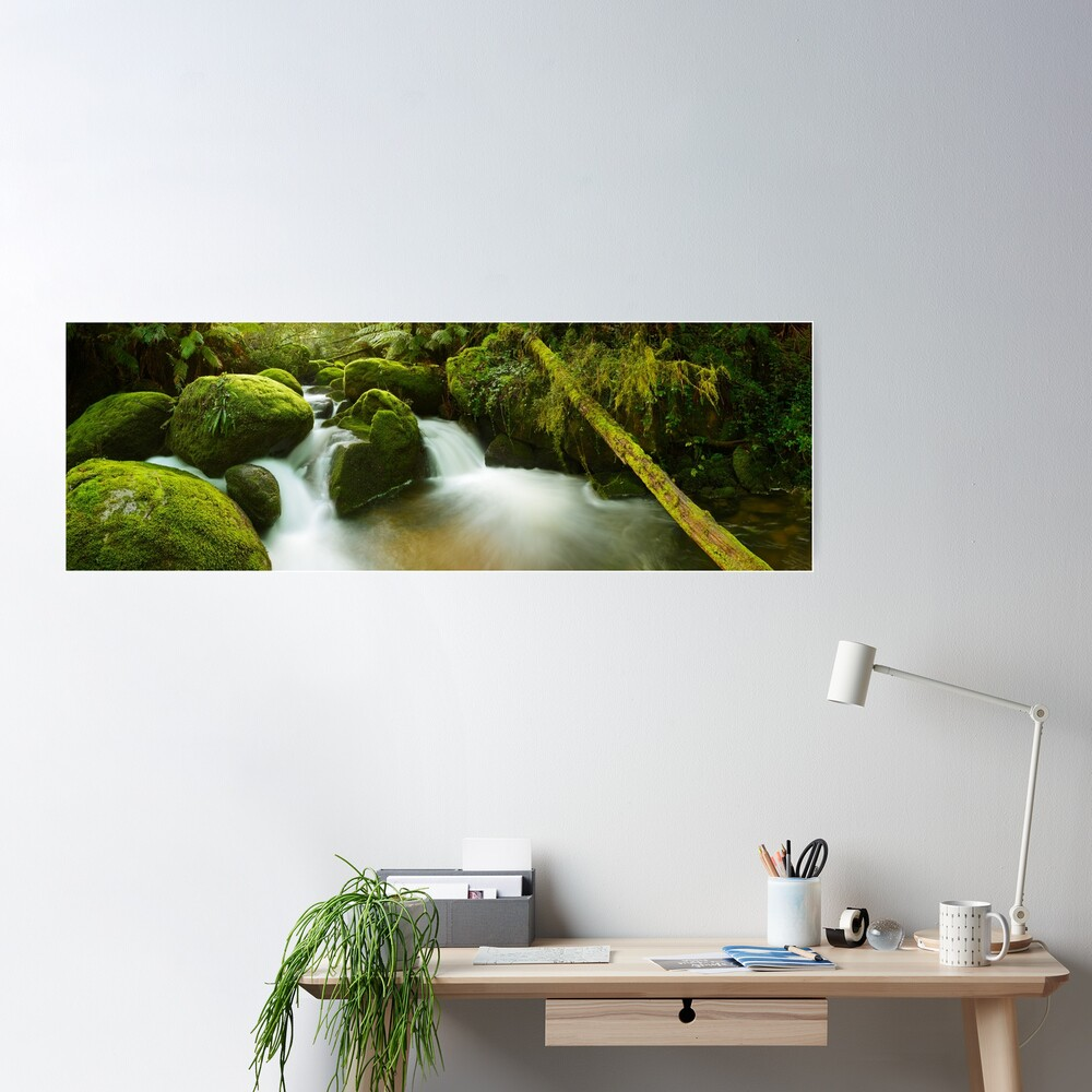 Dawn Moss, Toorongo River, Gippsland, Victoria, Australia Poster
