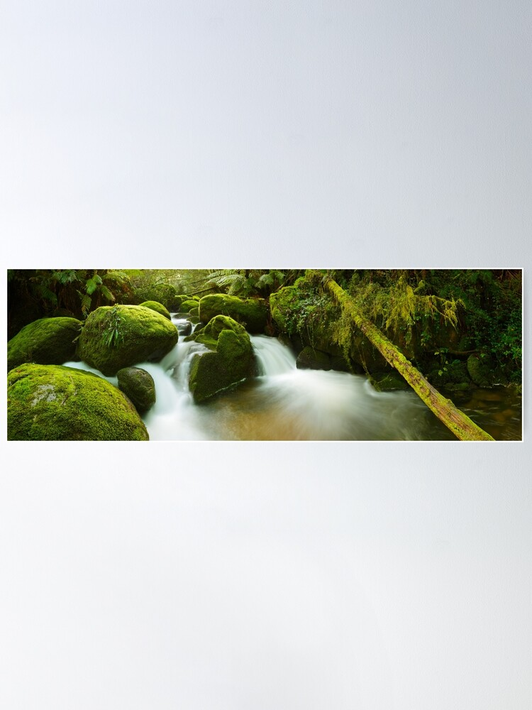 Alternate view of Dawn Moss, Toorongo River, Gippsland, Victoria, Australia Poster