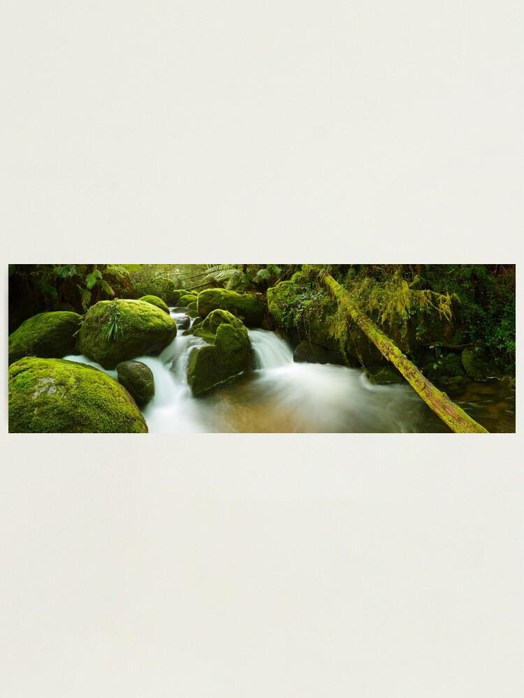 Alternate view of Dawn Moss, Toorongo River, Gippsland, Victoria, Australia Photographic Print