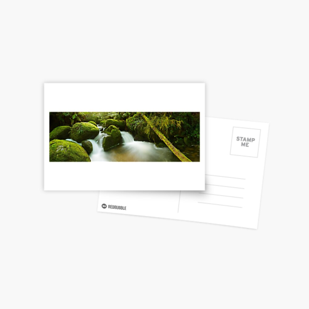 Dawn Moss, Toorongo River, Gippsland, Victoria, Australia Postcard