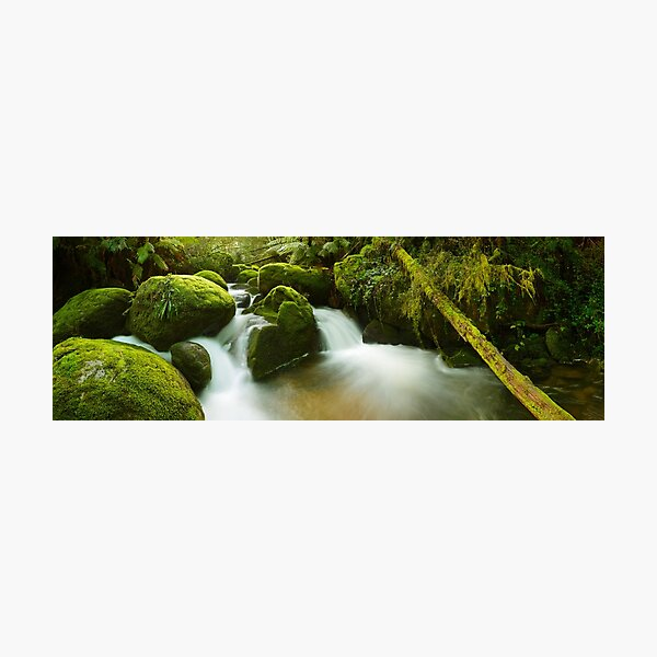 Dawn Moss, Toorongo River, Gippsland, Victoria, Australia Photographic Print