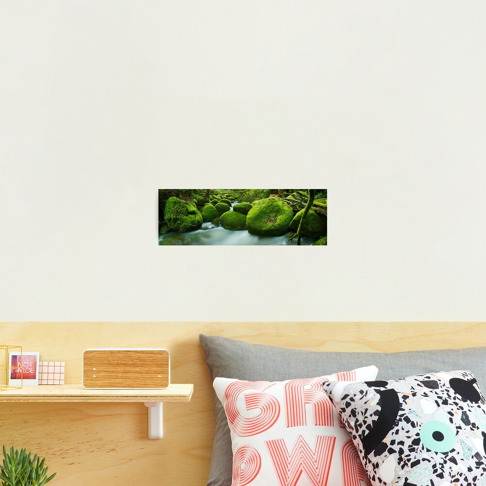Greenery, Toorongo River, Gippsland, Victoria, Australia Photographic Print