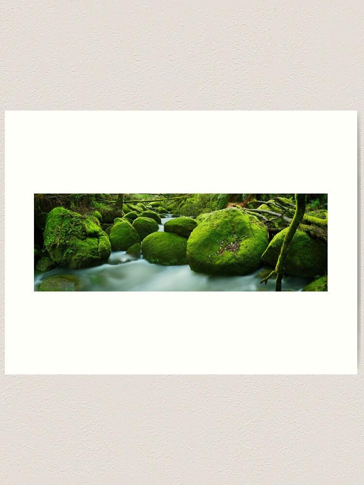 Alternate view of Greenery, Toorongo River, Gippsland, Victoria, Australia Art Print