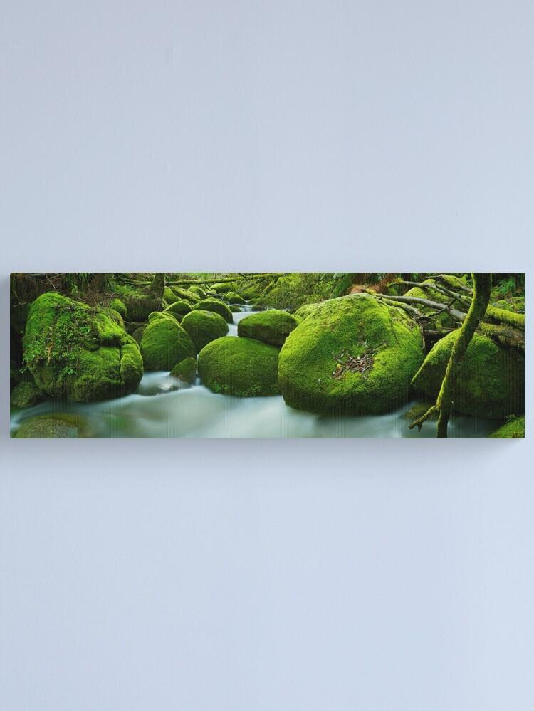Alternate view of Greenery, Toorongo River, Gippsland, Victoria, Australia Canvas Print