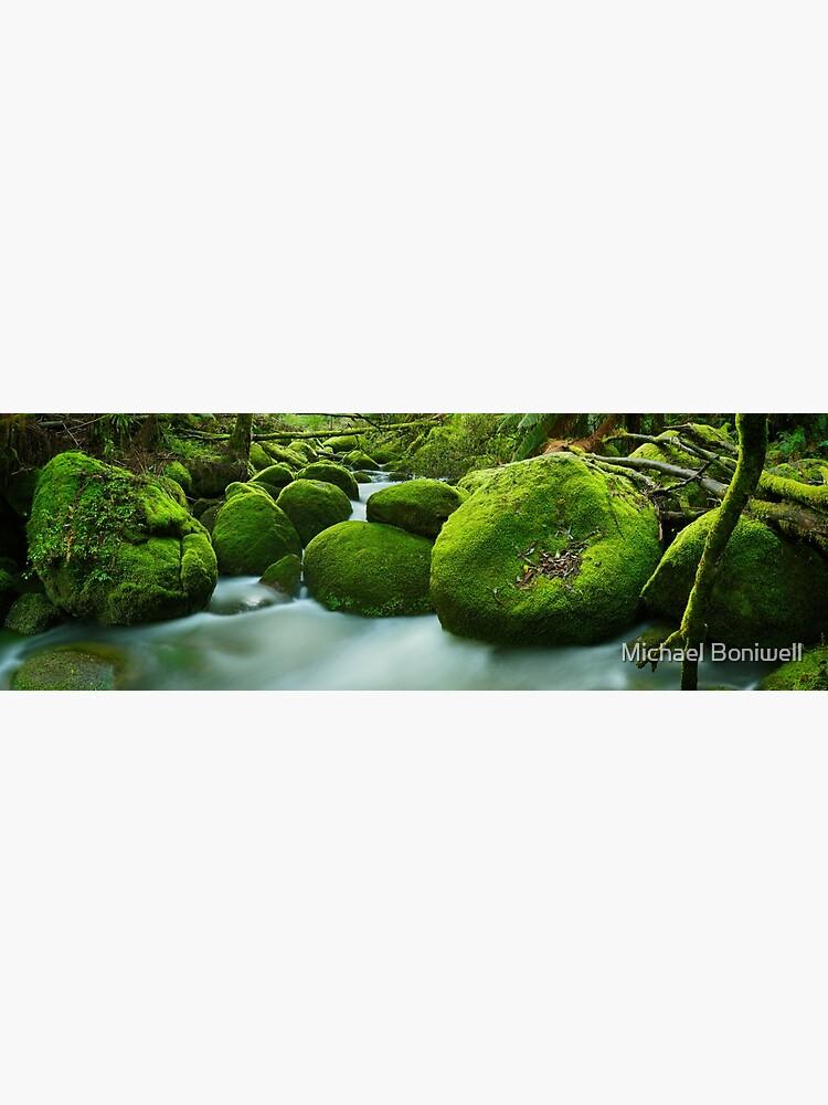 Greenery, Toorongo River, Gippsland, Victoria, Australia by Chockstone
