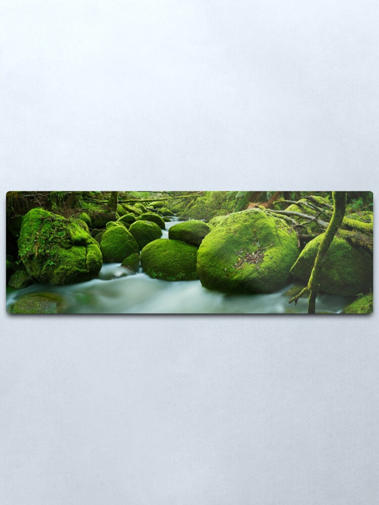 Alternate view of Greenery, Toorongo River, Gippsland, Victoria, Australia Metal Print