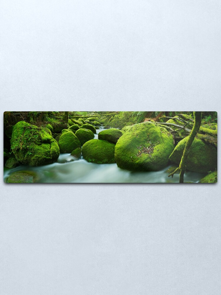 Alternate view of Greenery, Toorongo River, Gippsland, Victoria, Australia Metal Print