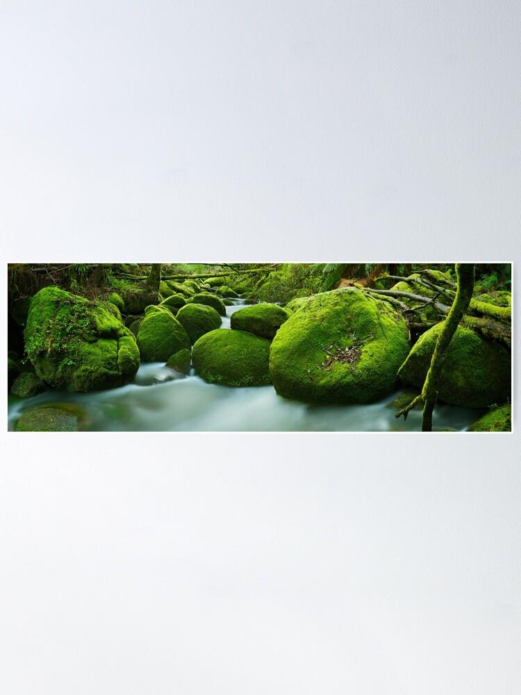 Alternate view of Greenery, Toorongo River, Gippsland, Victoria, Australia Poster