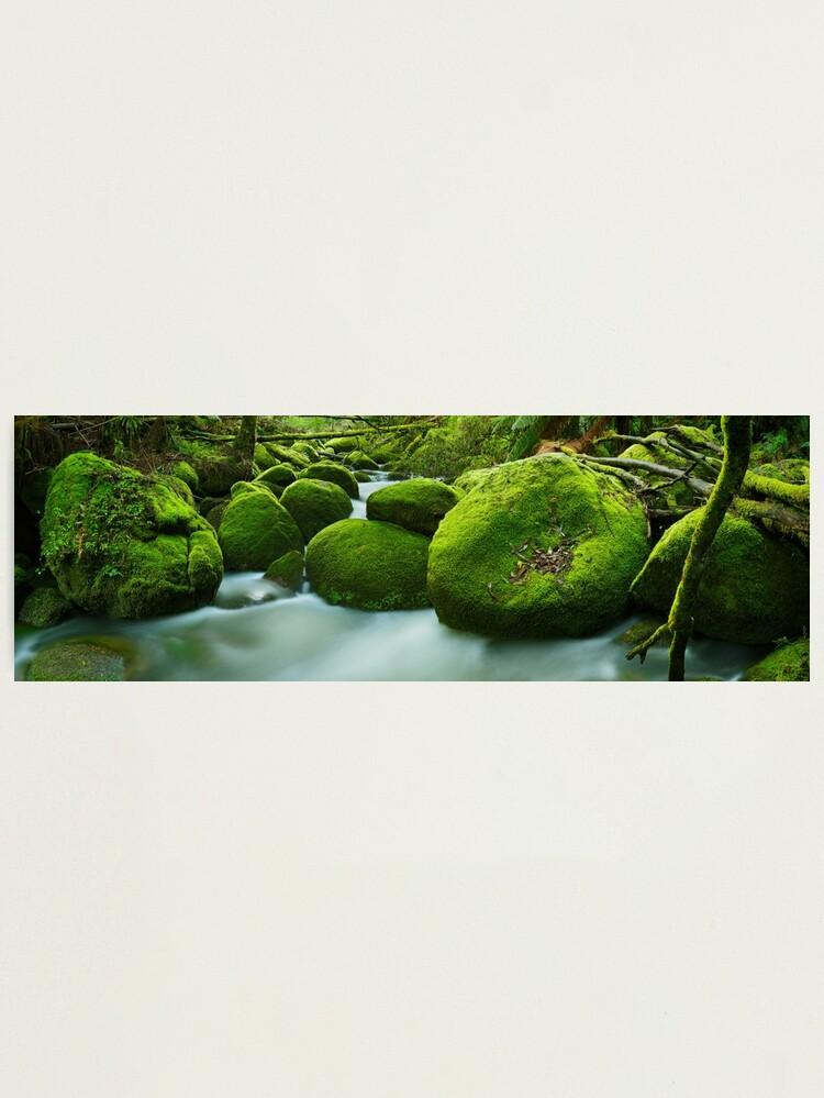 Alternate view of Greenery, Toorongo River, Gippsland, Victoria, Australia Photographic Print