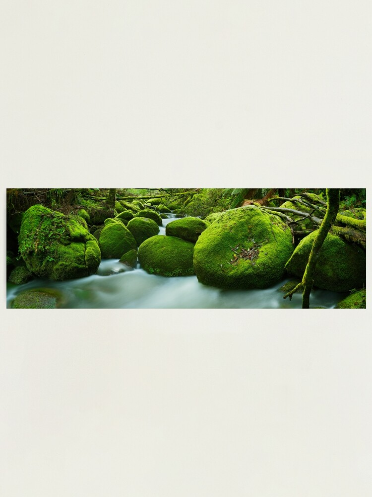 Alternate view of Greenery, Toorongo River, Gippsland, Victoria, Australia Photographic Print