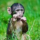 One step closer,,,,,,,,,,,,,  Eight week old Monkey by Elaine123