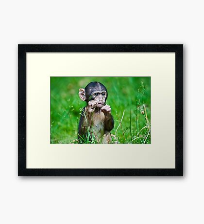 One step closer,,,,,,,,,,,,,  Eight week old Monkey Framed Print