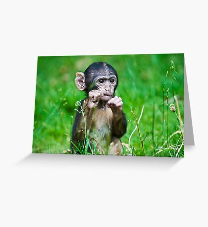 One step closer,,,,,,,,,,,,,  Eight week old Monkey Greeting Card