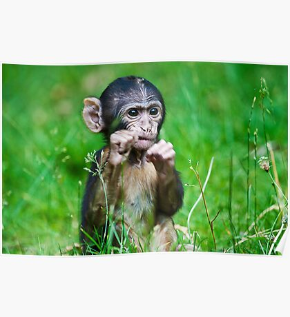 One step closer,,,,,,,,,,,,,  Eight week old Monkey Poster