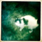 Scaredy cat by gemynd