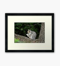 Successful Squirrel Framed Print