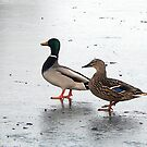 Walking on Ice by Trevor Kersley