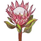 King Protea Colour I by h-creative